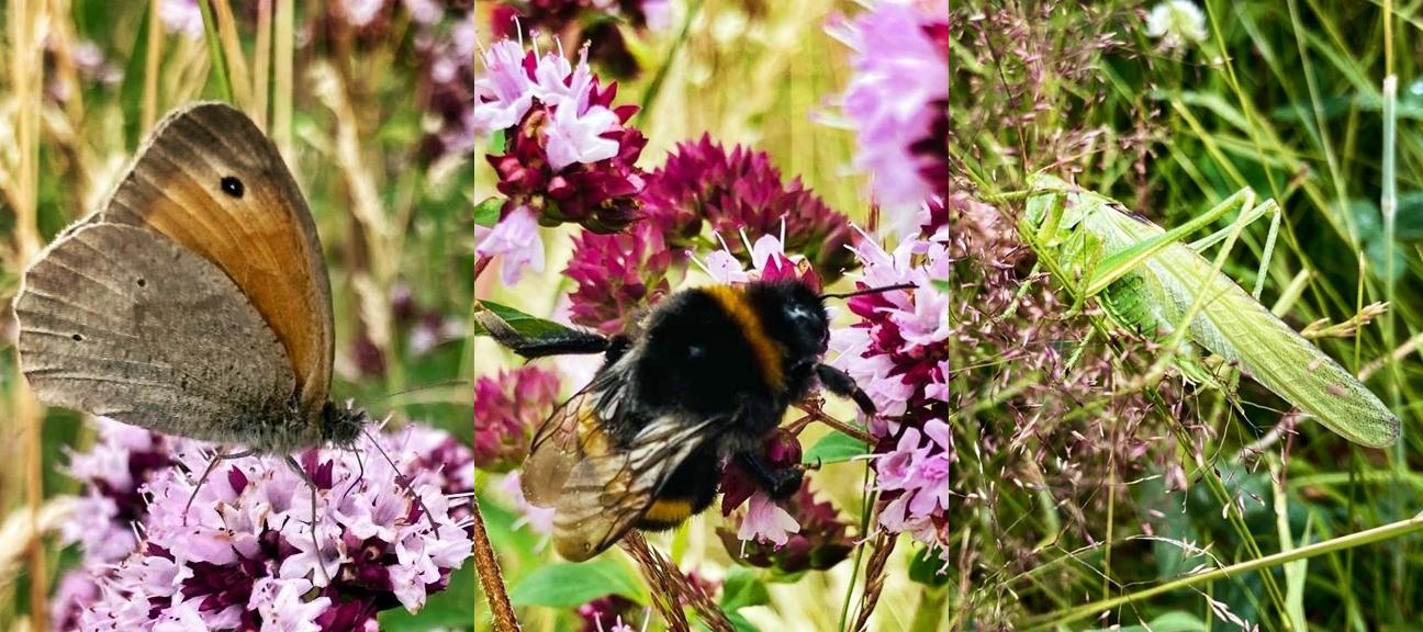 Sommer_Insekten_auf_Weide